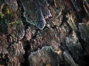 Natural wood bark close-up full frame