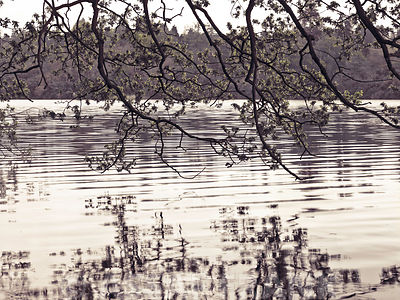 Branches above lake