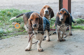 Albany and West Lodge Bassets Newcomers Meet 2012