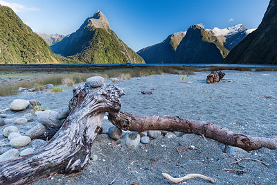 Beached tree trunk Milford Sound