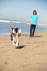 man with his dog on the beach chasing a ball