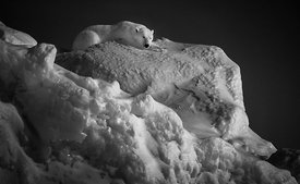 7002-Polar_bear_on_top_of_an_iceberg_Baffin_Island_Canada_2016_Laurent_Baheux