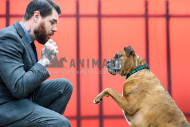 Man in a suit giving a treat to his Boxer