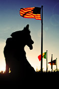 Dog silhouette by American flag