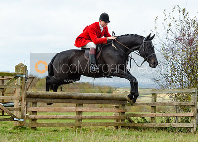 William Bell jumping a hunt jump at Stone Lodge. The Cottesmore Hunt at Tilton