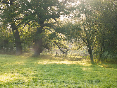Grass field with trees at sunrise