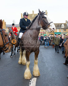Rider on a shire horse at the meet