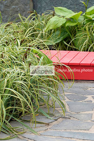 Pavement, Perennial, Stone, Digital, Grasses, Variegated