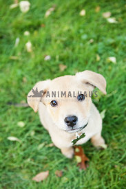 mixed breed mutt puppy dog sitting on green grass looking up brown eyes