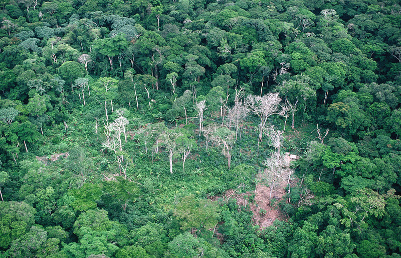 Aerial view of rainforest clearance for agriculture, Epulu Ituri Reserve, Democratic Republic of Congo, Central Africa