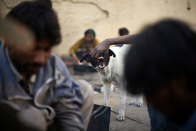 India - Delhi - Homeless men tease and feed a stray dog