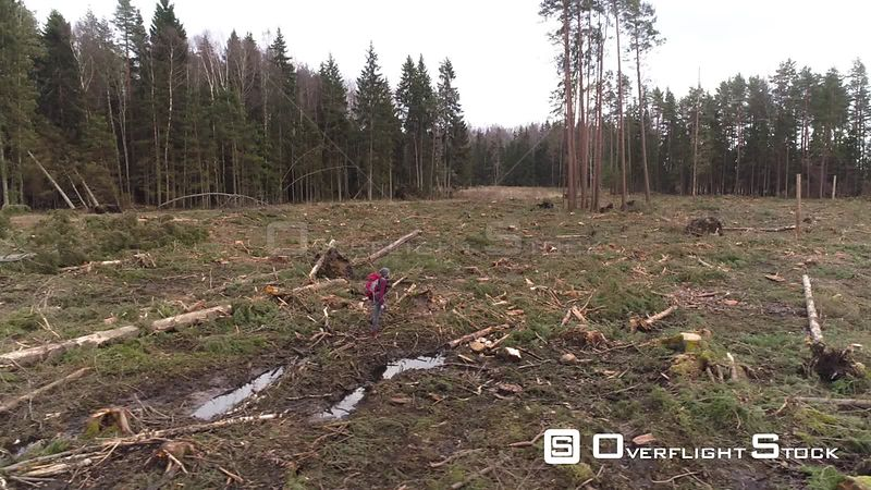 Aerial tracking shot of an outdoors man walking on wood felling site Latvia