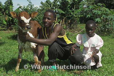 African boy and young girl beside young calf Kenya Africa