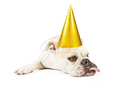 Funny Bulldog Wearing A Yellow Party Hat