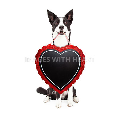 Happy Dog Carrying Valentines Heart Chalkboard