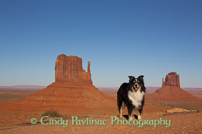 Merlin at Monument Valley Mittens