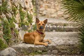 dog sitting on stone pathway in europe