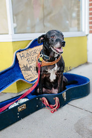 older mixed breed dog sitting in guitar case near homeless owner