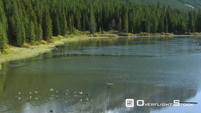 Ducks fly above Island Lake, settled in a steep valley in the Beartooth mountain Range, in southwestern Montana
