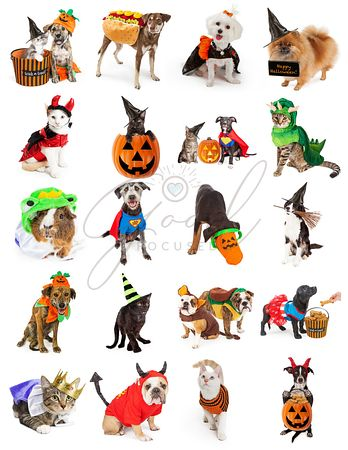 Set of Pets in Halloween Costumes