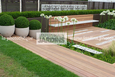 Agapanthus, Ball shaped, Bench, Buxus, Container, Contemporary garden, Perennial, Perennial rhizome, Pot, Sphere shaped, Topi...