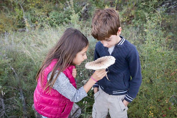 Rose, 7 ans et son cousin Camille, 8 ans sentent l'odeur d'une coulemelle,  Les Assions, Ardèche, France / Rose, 7 years old and her cousin Camille, 8 years old, smell a parasol mushroom, Les Assions, Ardèche, France