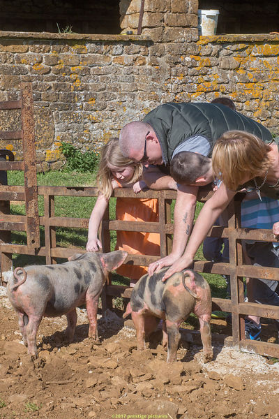 People reaching over a fence to stroke two spotted pigs at a Fram open day