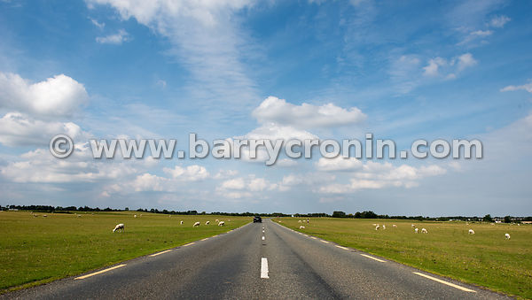 13th August, 2015.The Curragh, Co.Kildare...Photo:Barry Cronin/www.barrycronin.com 087-9598549 info@barrycronin.com