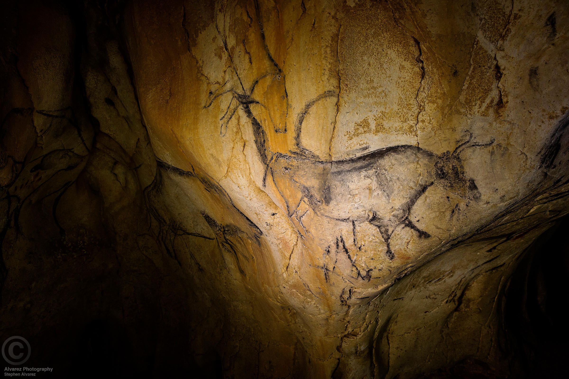 Auroch on the wall of Chauvet Cave, Ardeche France