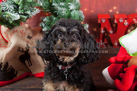happy puppy headshot with eye contact and festive christmas backdrop
