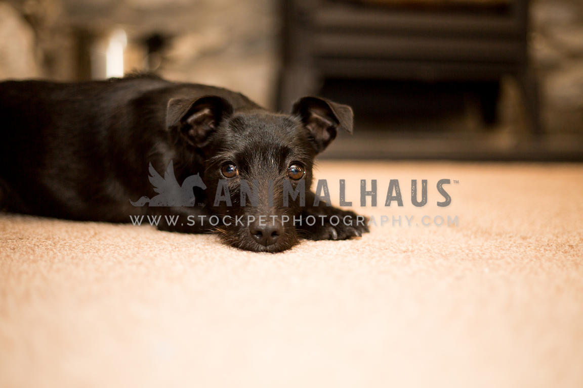 little black dog lying down in front of fire
