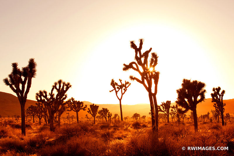 JOSHUA TREE NATIONAL PARK CALIFORNIA DESERT SUNSET COLOR