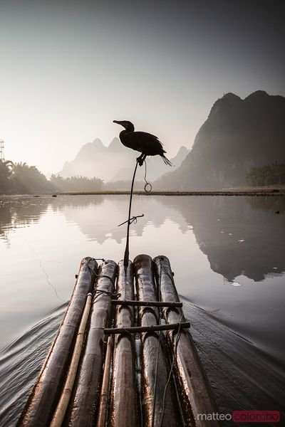 Bamboo raft with cormorant, Li river, China