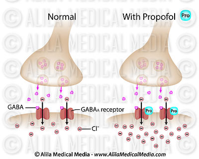 Propofol on GABA synapse labeled