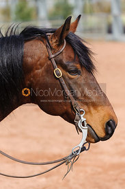 Stock photo of western bridle on horse