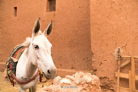 A donkey in the ksar of Ait Benhaddou in Morocco