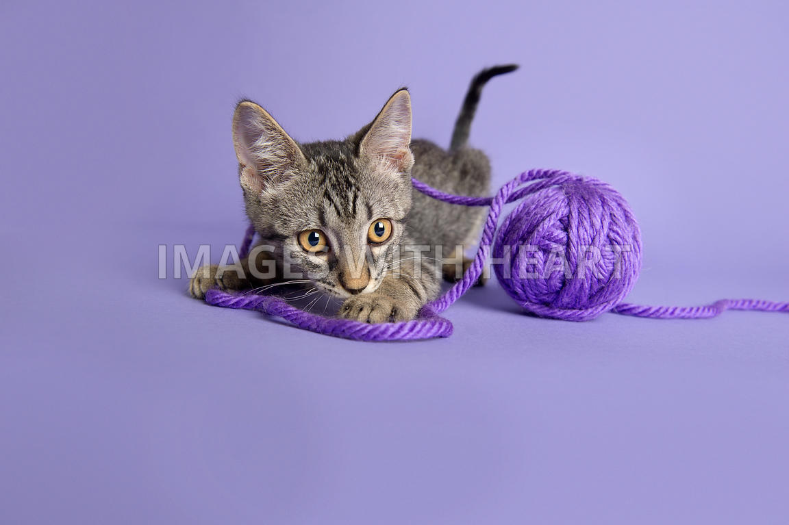 Playful tabby kitten with yarn