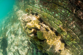 Sea Urchins and Corals in Dry Tortugas National Park, Florida, USA