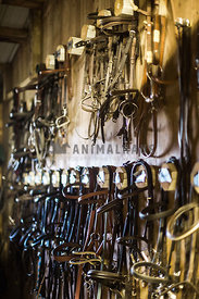 rows of bridles hanging in tack room