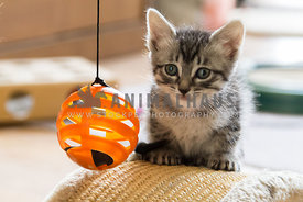 kitten sitting on scraper toy beside organg ball