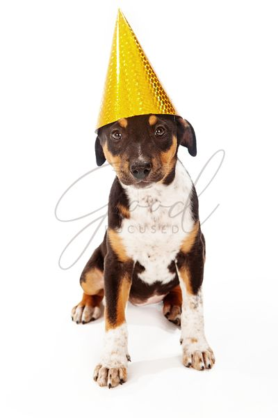 Puppy wearing yellow party hat