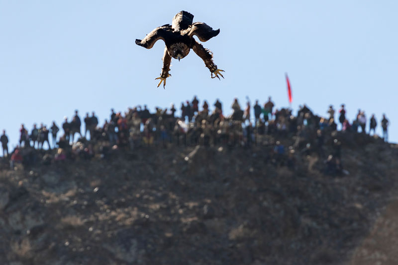 Golden Eagle Landing at Competition Site