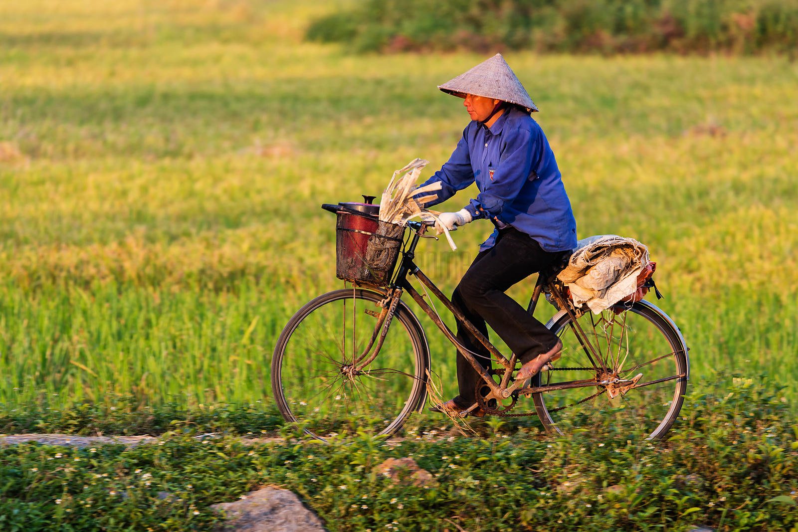 Rice Worker on her Bike at the End of ther Day
