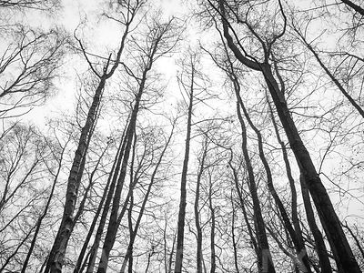 Low angle view of tall trees in forest