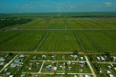 Aerial view of Sugarcane plantations, Georgetown, Guyana, August 2009