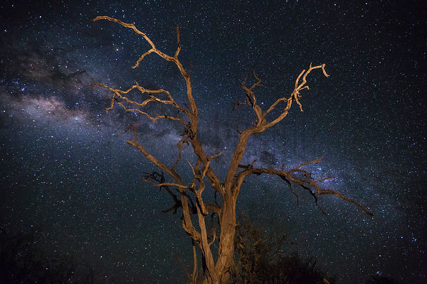 Dead Combretum Silhouetted Against the African Sky