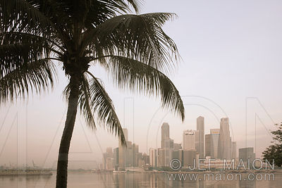 Singapore downtown and palm tree