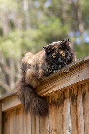 fluffly outdoor cat on the fence