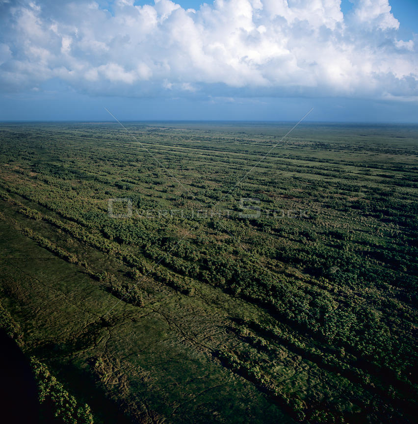 Aerial view of remnant vegetation on Mosquitio coastline, NE Caribbean coast, Honduras, Central America 2006