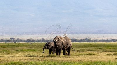 Mother and Baby African Elephant in Amboseli